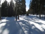sun_through_the_trees