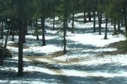 snow_and_trees_part_1