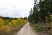 between_aspens_and_pines