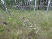 flowers_and_aspens