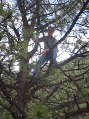 bob_climbing_a_tree