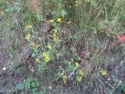 yellow_flowers