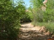 lush_trail