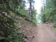 trail_in_the_trees