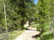 twisty_trail