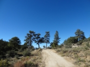 line_of_pine