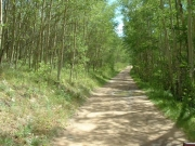 tree-lined_trail