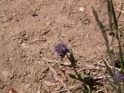 purple_flower_at_the_trailhead